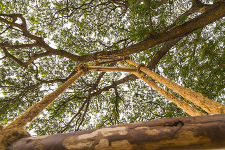 rope ladder: The rope ladder up on the tree. Stock Photo
