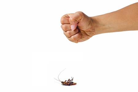 Hands clenched intending to kill cockroaches.Simulation insect infestation. Stock Photo