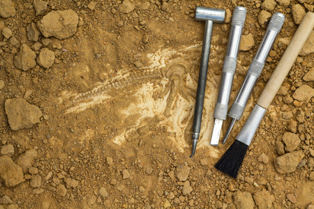 Skeleton and archaeological tools.Training for dig fossil.Simulated same as real digging.