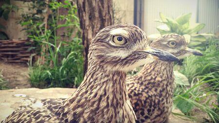 Two birds staring into the camera Standard-Bild