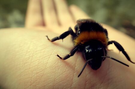 Bee on a hand
