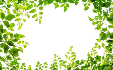 白い背景で隔離のグリーン リーフ フレーム