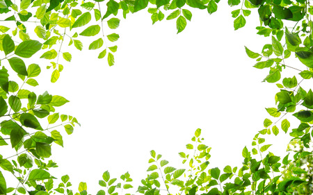 groene blad frame geïsoleerd op witte achtergrond