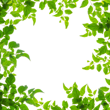 green leaf frame isolated on white background