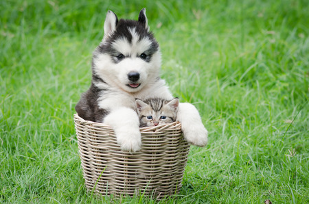Cute puppy and kitten in basket on green grass Stock Photo