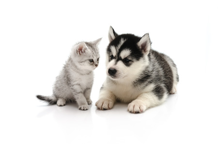 Cute Kitten and puppy  looking on white background isolated