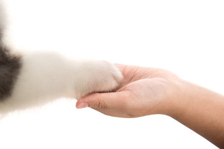 give me five: Give me five -Puppy pressing his paw against a Girl hand on white background isolated Stock Photo