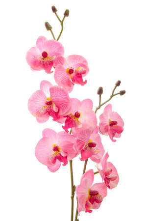 Close up of beautiful orchid isolated on white background photo