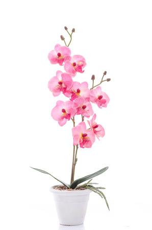 白いポットの白い背景で隔離の美しい蘭の花のクローズ アップ