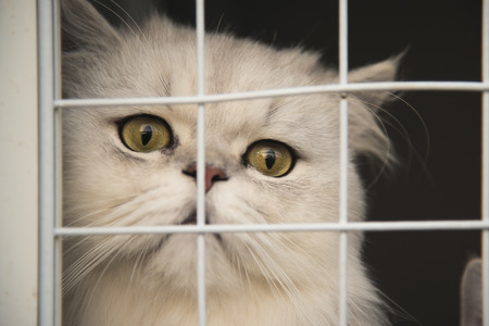 Lonely cat with big eyes in a shelter