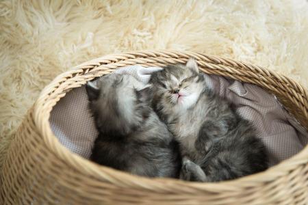 バスケットで眠っているかわいいぶち子猫 写真素材
