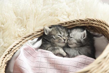 かわいいぶち子猫睡眠とバスケットにハグ