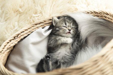 Cute tabby kitten sleeping in a basket Standard-Bild