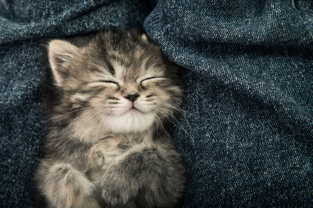 背景にブルー ジーンズ、ビンテージ フィルターで寝ているかわいいとら子猫のクローズ アップ 写真素材