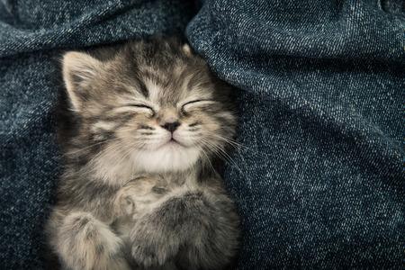 Primo piano di cute gattino tigrato a pelo su sfondo blu jeans filtro epoca Archivio Fotografico - 42876513