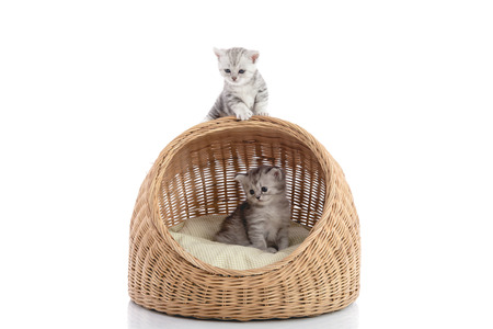 cute kittens: Cute kittens in wicker bed on white background isolated