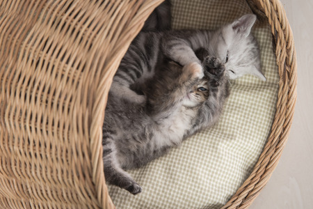 differ: Cute kittens playing in wicker bed on white background isolated Stock Photo