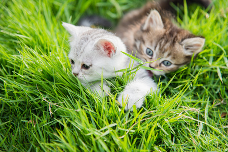 Two kittens playing on green grass Stock Photo