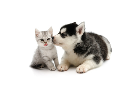 cute kitty: Cute puppy kissing cute tabby kitten on white background isolated