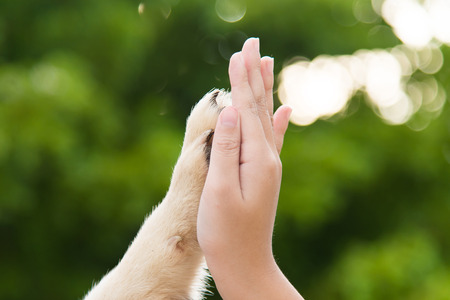 give me five: Give me five -Puppy pressing his paw against a Girl hand on nature background