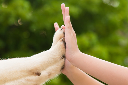 Give me five -Puppy pressing his paw against a Girl hand on nature background