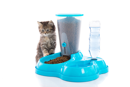 Cute tabby kitten with feeder bowl on white background isolated