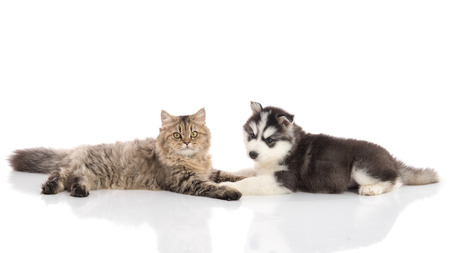 animals together: Cat and dog together lying on a white background,isolated