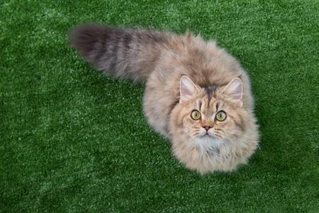 Cute tabby cat lying on green grass