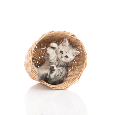 kitten: Cute kittens playing in a basket on white background isolated