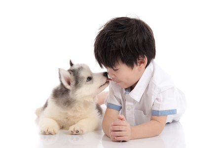 girl lying studio: Cute siberian husky puppy lying and kissing asian boy on white background isolated