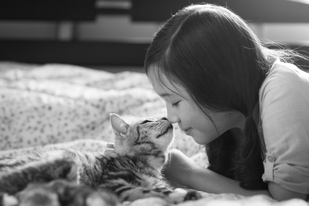 Beautiful asian girl kissing american shorthair cat on the bed Stock Photo