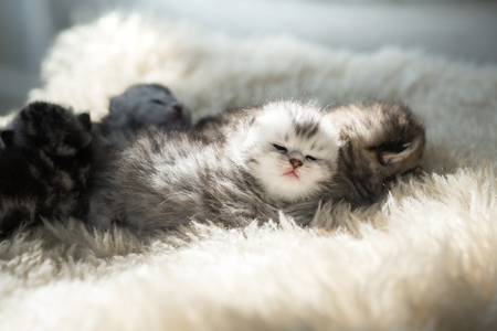 Close up of newborn kitten lying Stock Photo