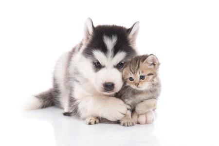 分離した白い背景の上のかわいい子猫を抱きしめるかわいいシベリアン ・ ハスキー子犬