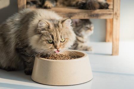 Cute persian cat eating dry food on white floor