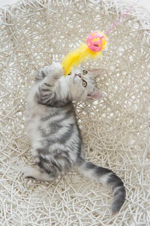 Leuk tabby katje spelen speelgoed op witte mand stoel