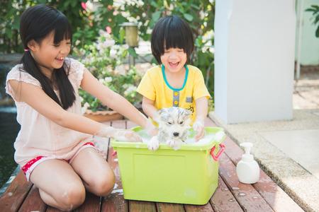 Asian children wash siberian husky puppy in the basin on the summer