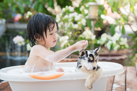 bath: Cute asian  child bathing with siberian husky puppy in the garden on a hot sunny summer day
