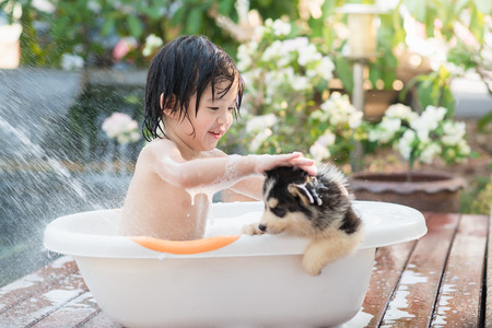 Cute asian  child bathing with siberian husky puppy in the garden on a hot sunny summer day Imagens - 56642410