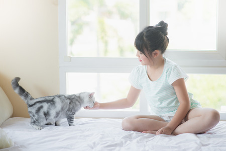pet cat: Beautiful asian girl playing with american shorthair cat on the bed Stock Photo