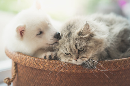 seep: Cute siberian husky and persian cat lying in basket bed Stock Photo