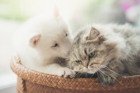 Cute siberian husky and persian cat lying in basket bed Stock Photo