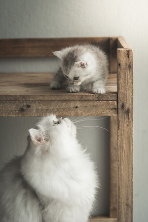 Cute kitten playing with mother on wooden shelf Stock Photo
