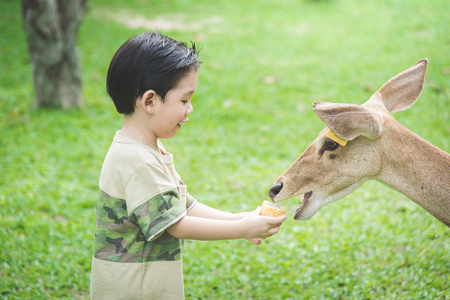 Cute Asian child feeding deer