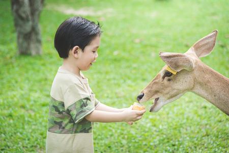 Nette asiatische Kindernährung Hirsch Standard-Bild - 61504202