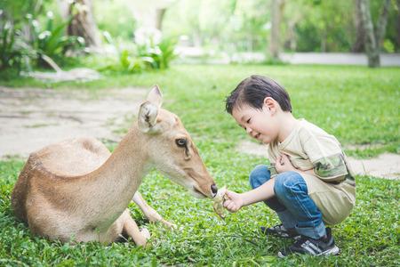 Cute Asian child feeding deer