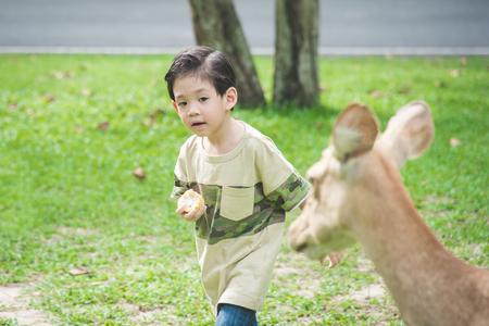 zoo youth: Cute Asian child feeding deer