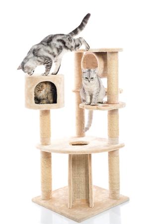 分離した白い背景のキャット タワーで遊ぶ猫