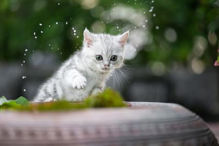 Cute kitten shakes the water off its leg
