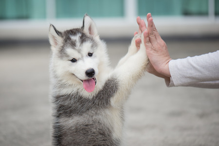 paw smart: Give me five -Puppy pressing his paw against a Girl hand