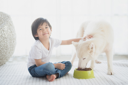 Cute Asian child feeding siberian husky dog at home